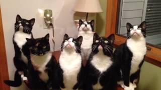 Six Synchronized Cats Follow a Moth