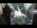 Gambar cover Propagated Fruit Tree Cuttings Update And Test