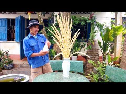 Hoa dừa - Crazy video