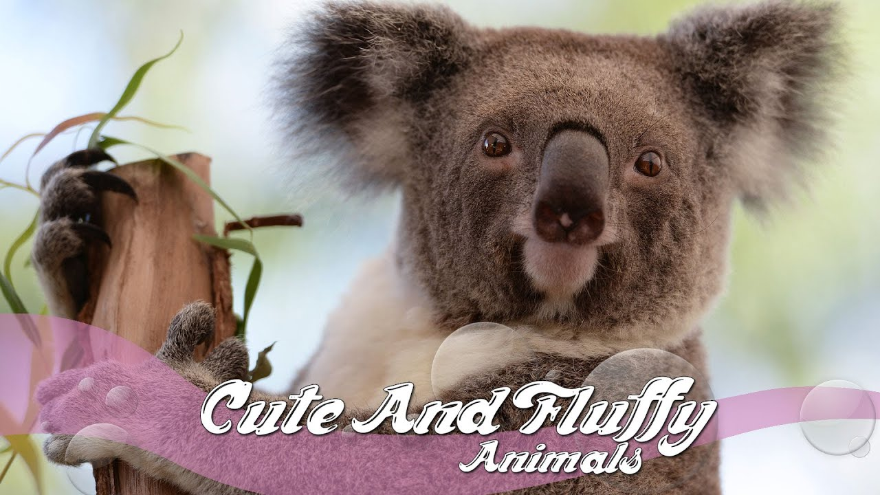 Having A Bad Thursday?? Well Here's Some Cute Fluffy ... |Cute Fluffy Talking Animals
