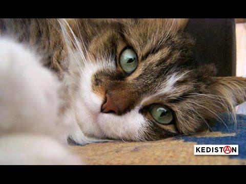 tutoriel pour chats comment hacker la chati re youtube. Black Bedroom Furniture Sets. Home Design Ideas