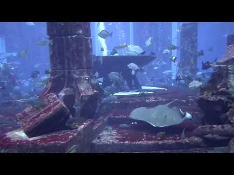 The Lost Chambers Aquarium from Atlantis Resort Dubai U.A.E. 2016
