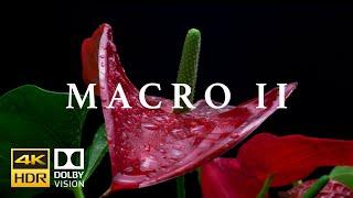 Macro II HDR 4k 60fps Dolby Vision Laowa Probe Lens