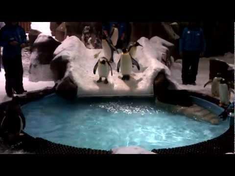 Penguin Show Ski Dubai