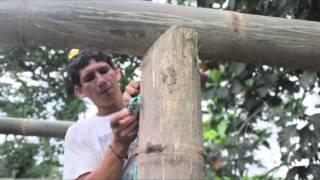 Cabañas de bambú, Hacienda Pepepán