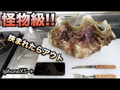 挟まれたらアウト!!沖縄の人喰い巨大シャコ貝の解体が鬼畜すぎ!!