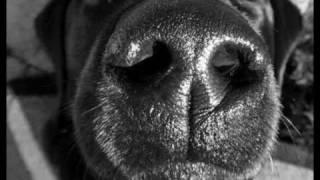 Песни нашего века - Песенка о собачке Тябе