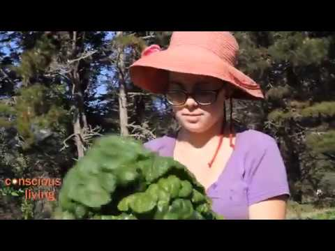 The Zen of Organic Farming