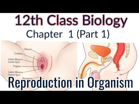 12th Class Biology - Chapter 1 thumbnail