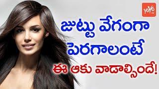 జుట్టు వేగం గా పెరగాలంటే ఈ ఆకు వాడాల్సిందే  ..| How To Make U R Hair Grow Faster...  YOYO TV Channel