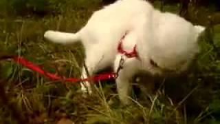 Кот ест траву.mp4