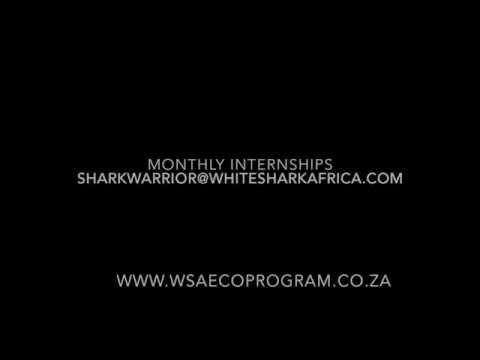 White Shark Africa Internship Program Promo Video
