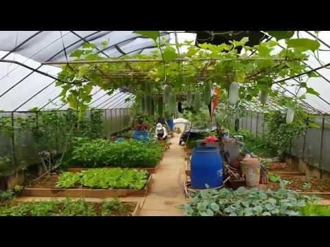 Organic Farming in Singapore . Video 2 of 10