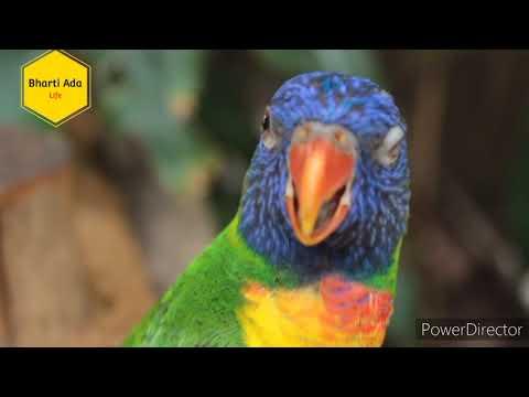 Видео с милыми птицами-попугаями 2021 || Life Of Bird {Parrot} || Бангалиния, Пардезия Кхесари лал Бест 💐🎂🎂🎂