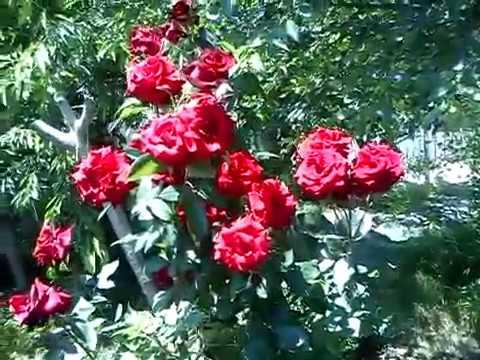 Фиточай Травы Горного Алтая Красная щетка отзывы