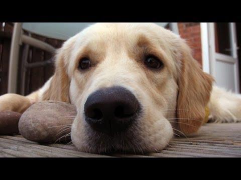 Considering Dogs with Alexandra Horowitz