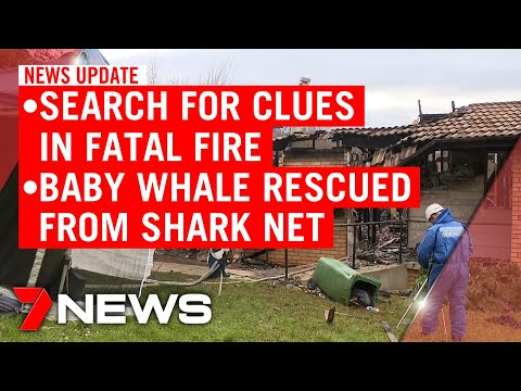 7NEWS Update Tuesday, May 19: Search for clues in Batlow fire; whale calf freed from nets | 7NEWS