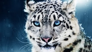 awesome animals hd 1080p 3d