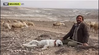Hayvanlarına Evladı Gibi Bakan Çobanın Vedası :(