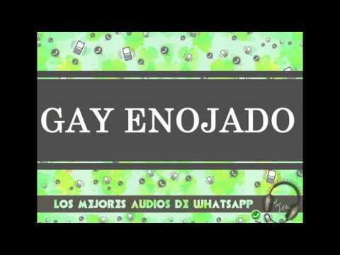 GAY ENOJADO - Los Mejores Audios De WhatsApp