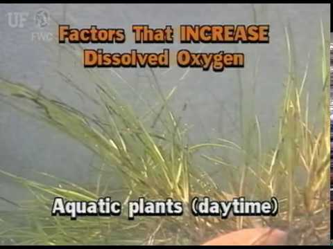 a description of dissolved oxygen which infers to the volume of oxygen that is contained in water Dissolved oxygen when monitoring water quality dissolved oxygen levels fluctuate naturally with the change it is a function of water volume and.