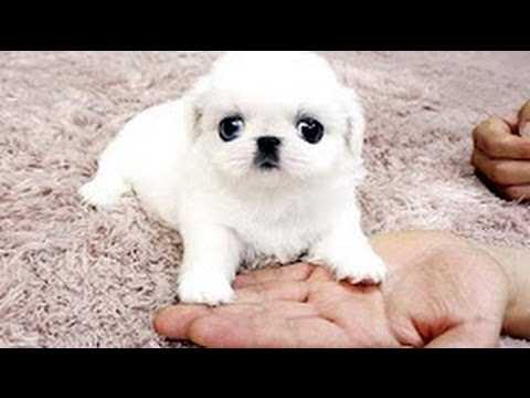 Best Of Cute Baby Animals Videos Compilation 2017  [NEW VIDEO]