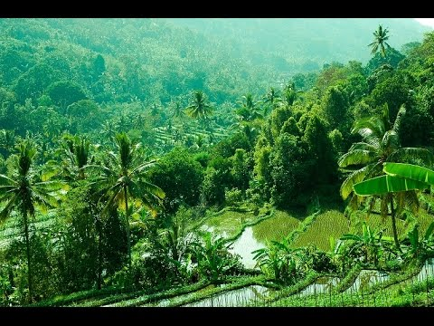 Lovina, Bali : Welcome to the Undiscovered Part of Bali!
