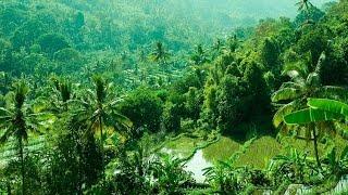 ubud_3 Bali Cool