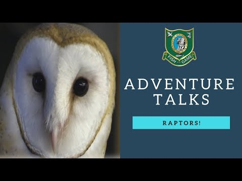 NH Fish and Game Adventure Talks - Raptors!