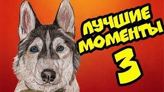 ХАСКИ БАНДИТ ЛУЧШИЕ МОМЕНТЫ ЧАСТЬ 3 (Хаски Бандит) Говорящая собака
