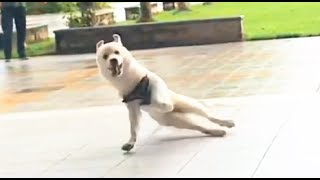 TikTok funny videos dog try not to laugh at this ultimate funny dog video funny pet videos ep9