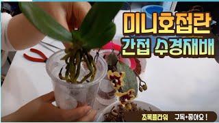 미니호접란 간접 수경재배!! / Indirect hyd…