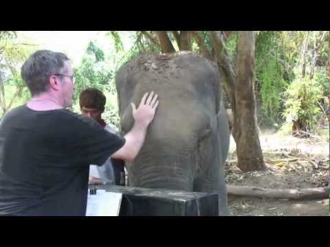 Piano for Elephants in Thailand (video diary)