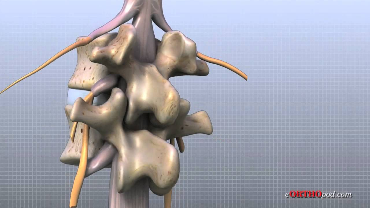 Lumbar Spine Anatomy Youtube