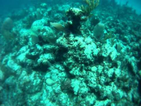 me scuba diving in exuma