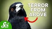 7 of Australia&#39s Most Terrifying Inhabitants