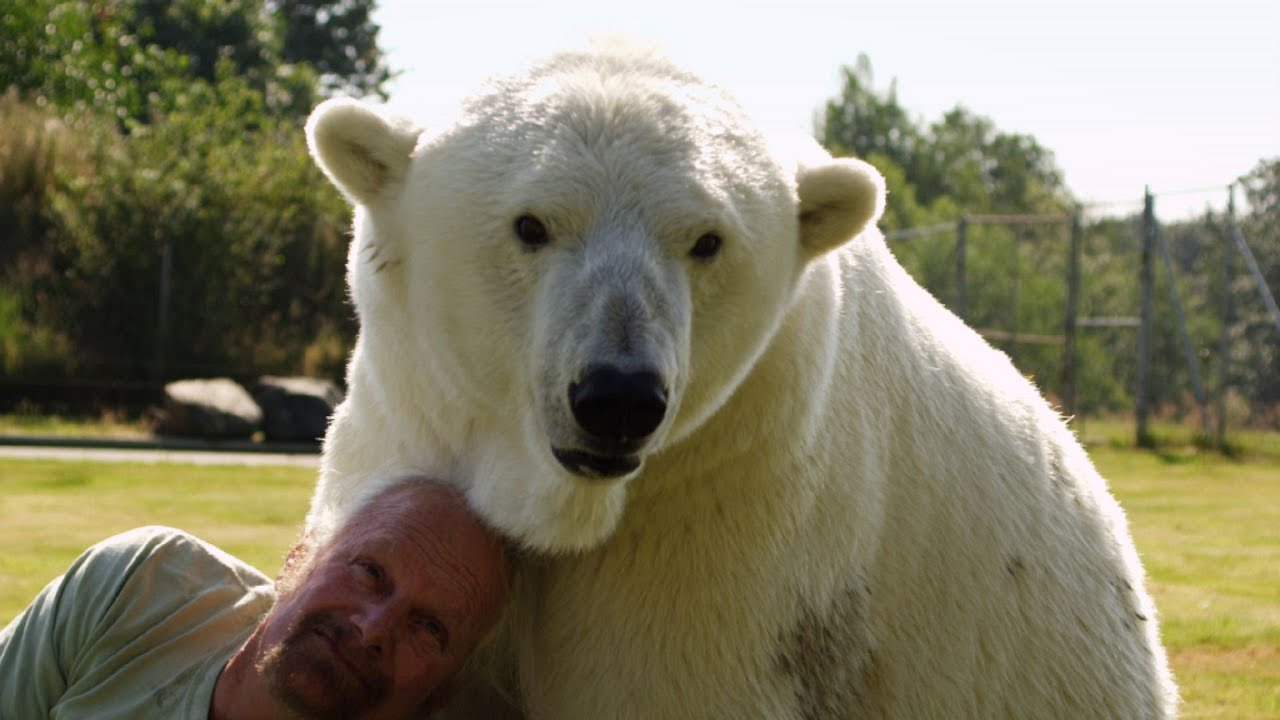 Man cuddles polar bear - Animal Odd Couples: Episode 2 Preview - BBC One