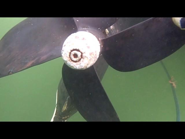 Seaweed 01/20/19