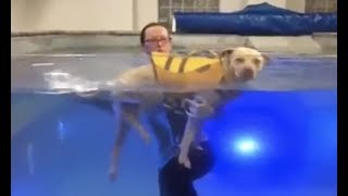 LIVE: Paralyzed Dog Swims at Water Therapy Session | The Dodo