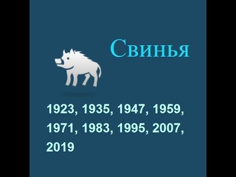 Год свиньи, гороскоп составленный психологом Натальей Кучеренко.