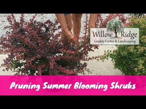 How To Prune Summer Blooming Shrubs