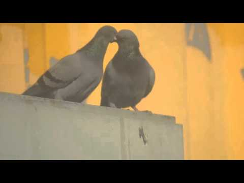 So Cute Pigeons I Love Them What About You?