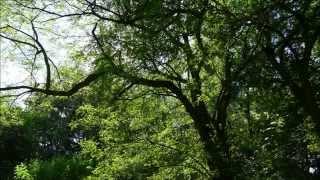 Super Crepitus Rana - Die Klänge eines ( Riesen Nico) Knallfrosch