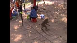 Monkey Stealing Fruit