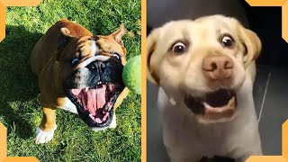 Dog Fail Compilation Video| Funny Dogs Vines| Try Not To Laugh