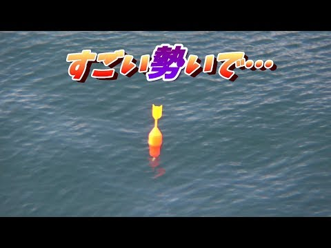 青物のませ釣りのアタリ、ウキの沈む瞬間