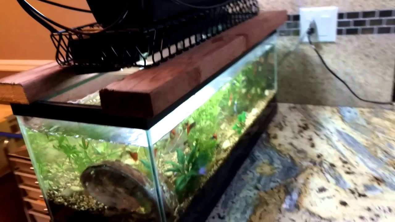 20 Gallon Aquarium Custom Aquaponics System