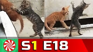 Funny Cat Videos for Kids | S1-EP18 | Cats Playing || Capture Candy Kids TV