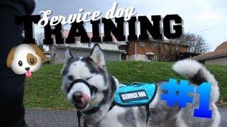 Service Dog Training #1 - The Basics!