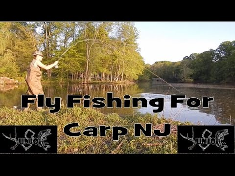 Fly Fishing For Carp 2016 New Jersey